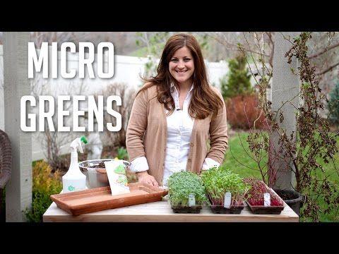 How To Grow Microgreens Growing Microgreens Microgreens