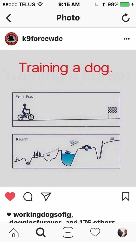 Essay training dog esl research proposal editor sites uk