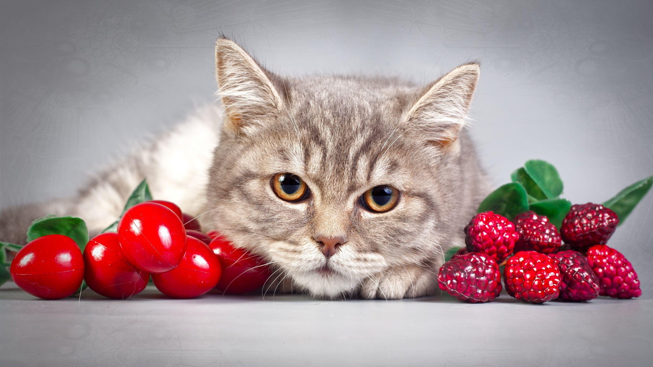 고양이, 고양이, 눈, 세로, 딸기 2560x1440