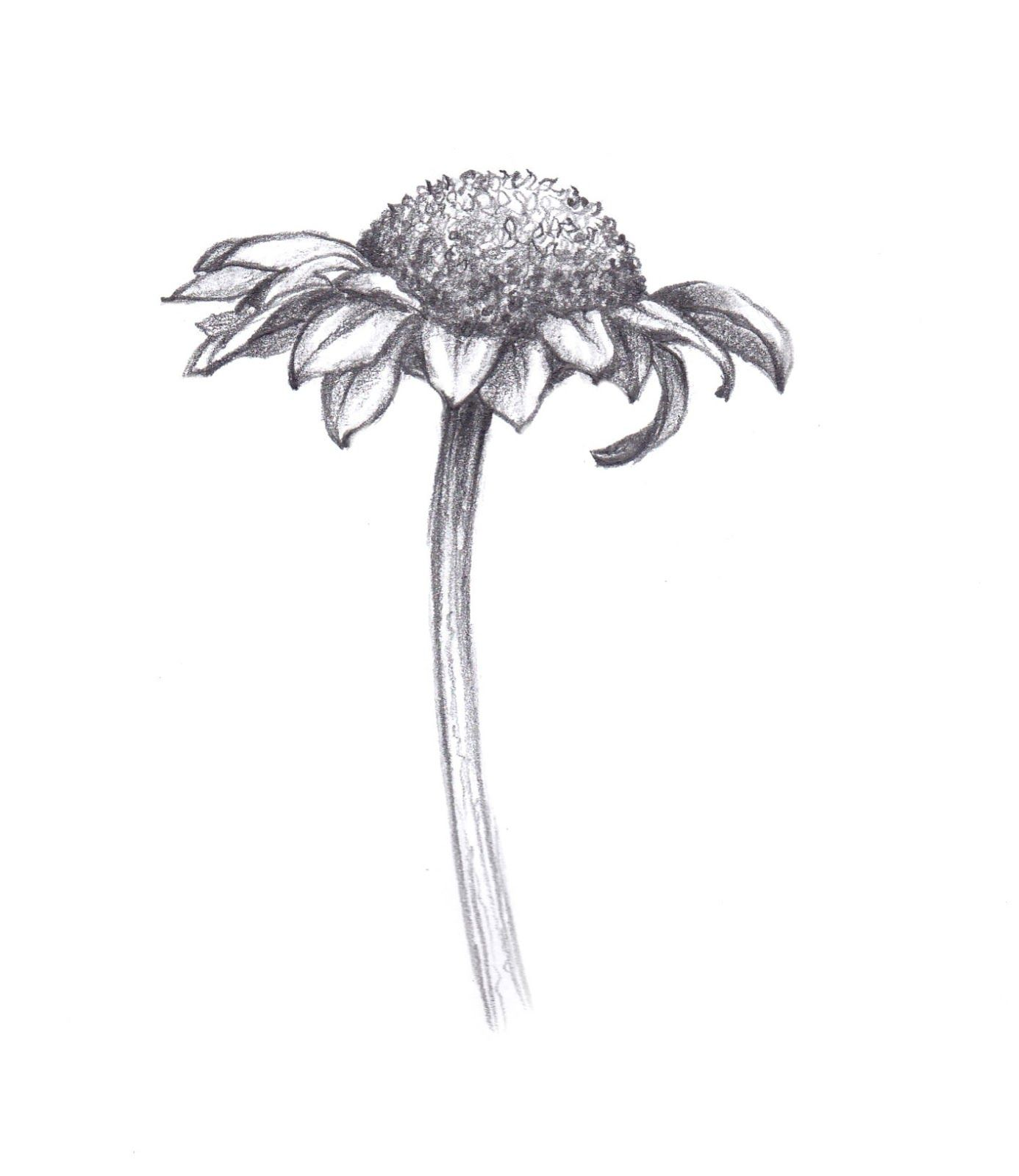 Daisy meaning innocence | Tattoos | Pinterest | Sketches ...