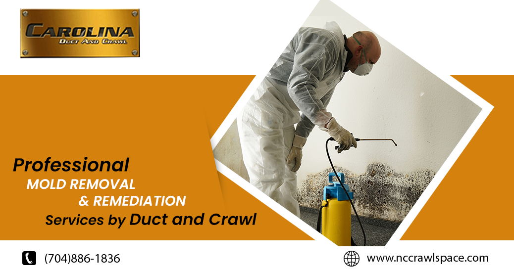 Mold Remediation Services by Duct and Crawl Mold