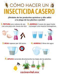 Insecticidas caseros para eliminar la plaga de tus plantas