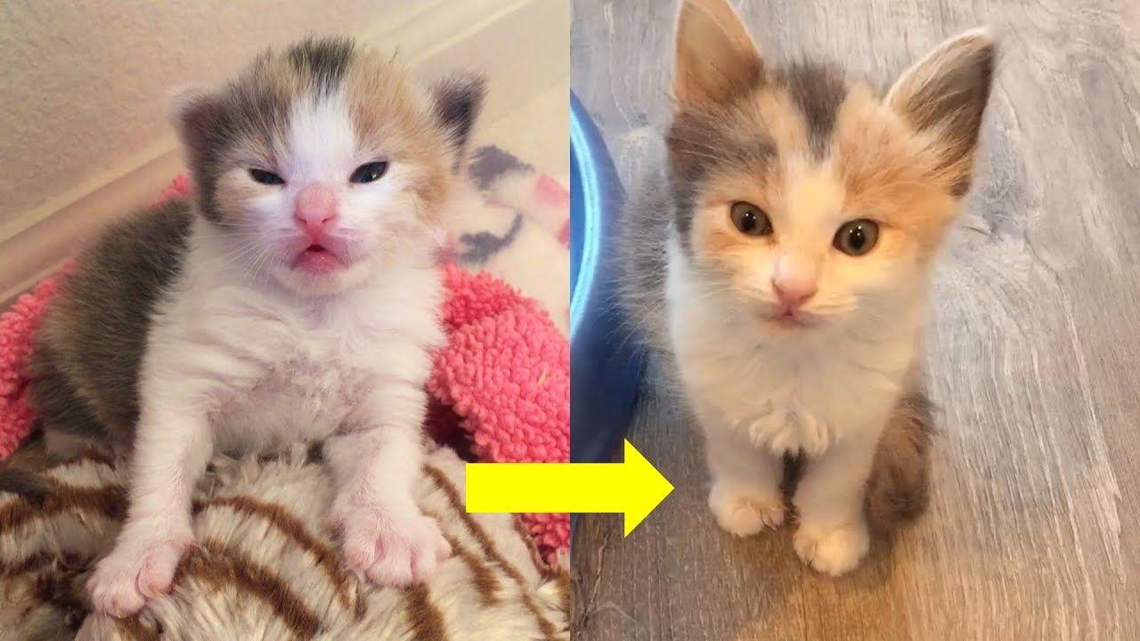 Rescue Tiny Bottle Kitten Transform To Such Sweet Cat Cute Kitten Gif Cats And Kittens Kitten