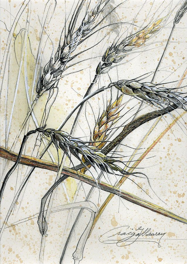 Unless A Grain Of Wheat Fall . . . Drawing Wheat drawing