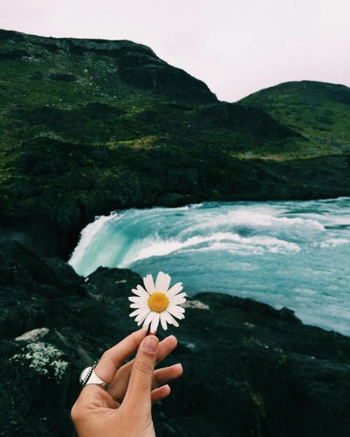 Pretty flowers, water and green hills