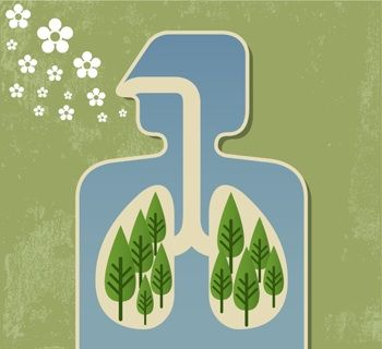 Breathe Deep 5 Ways To Improve Your Home S Air Quality For Better Health