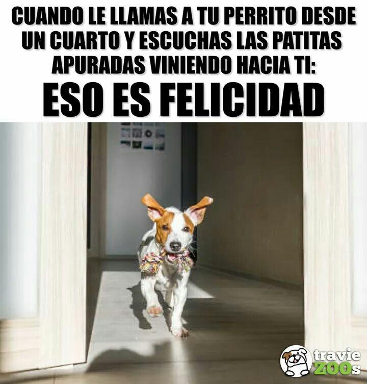 Eso Es Felicidad Perros Frases Animales Frases Cuidar Animales