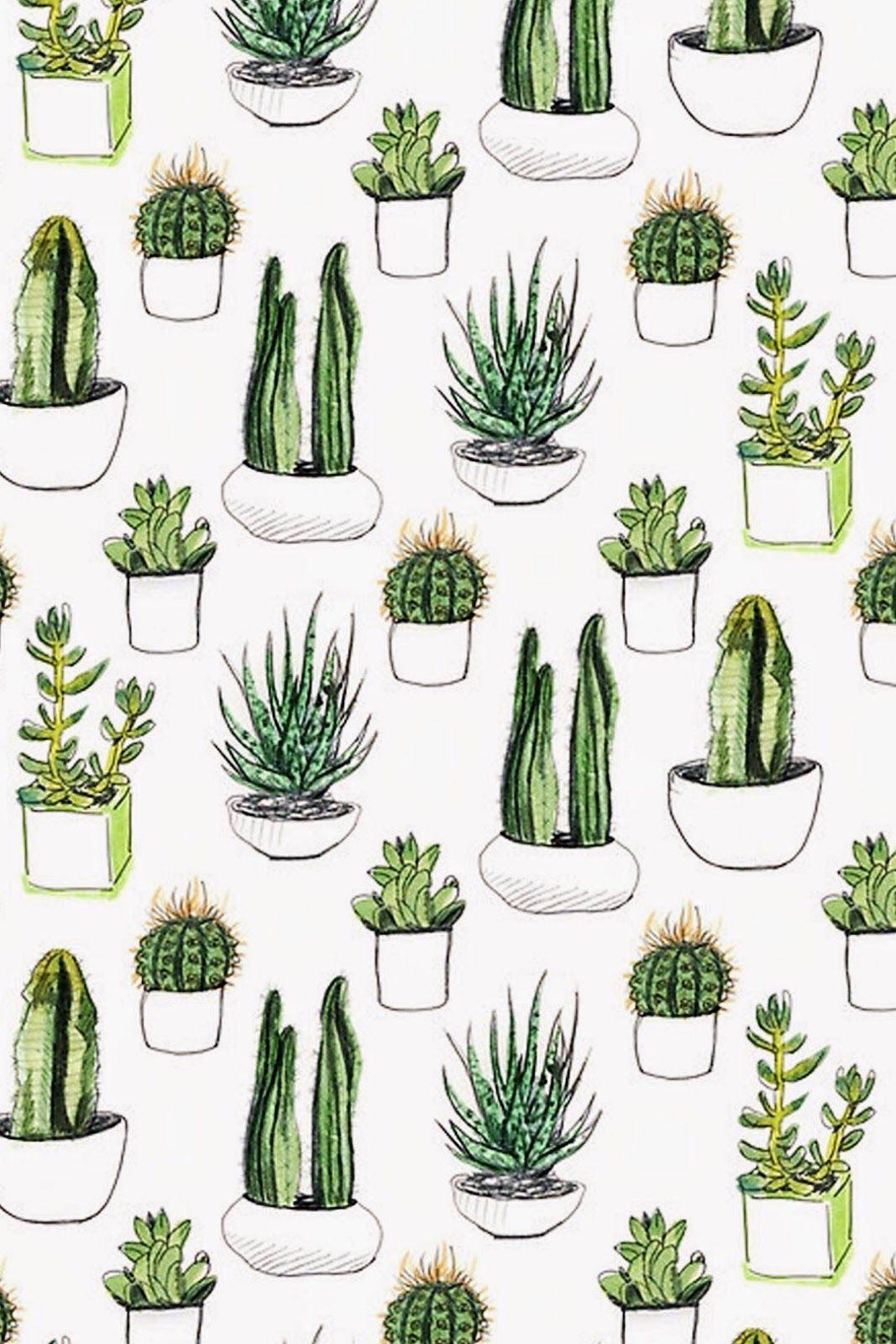 Cactus Draw More Artistas Fondos Fondos De Pantalla Fondos De