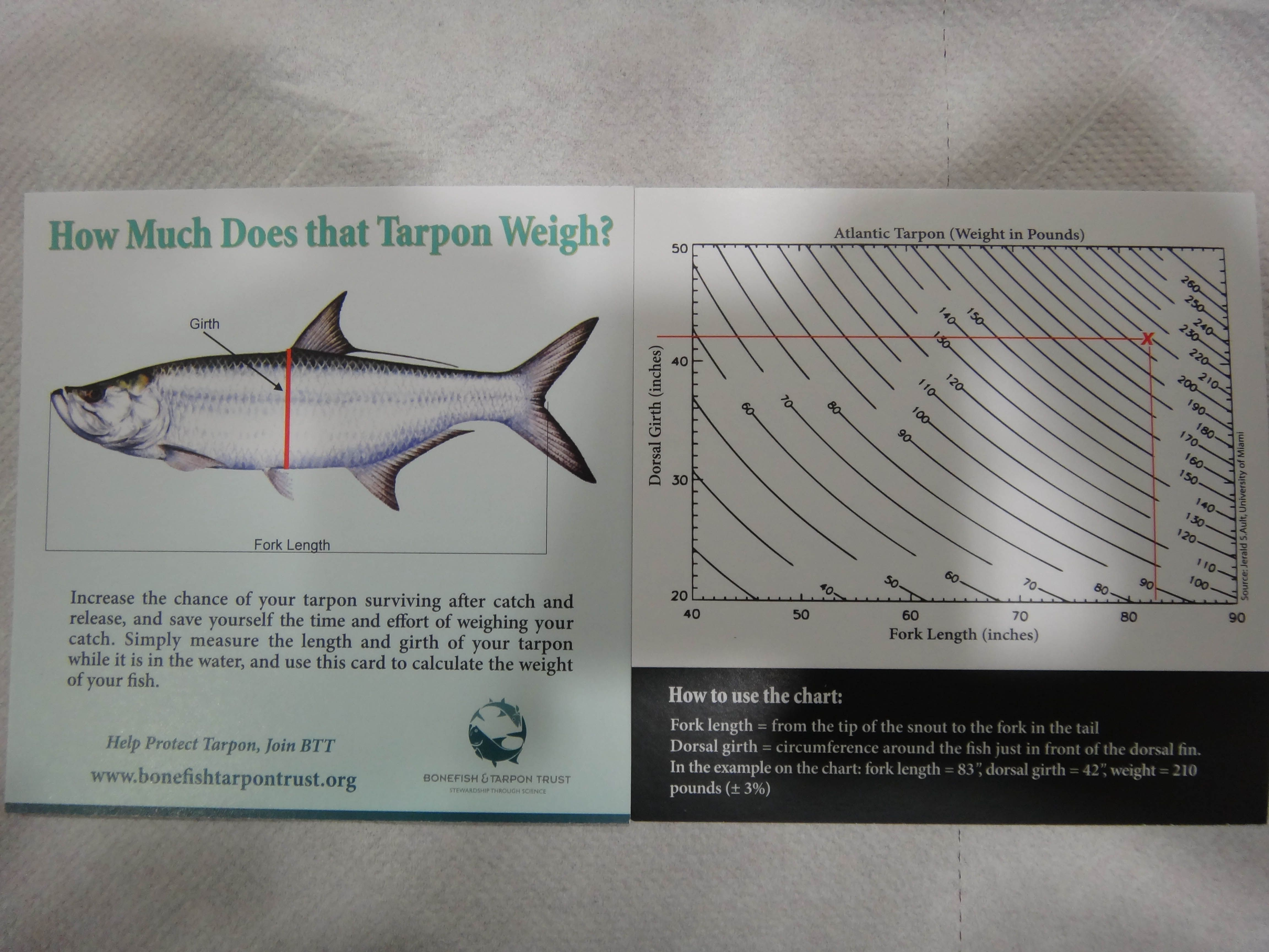 Tarpon weight chart choice image free any chart examples respect the fish tarpon fish on pinterest fish tarpon nvjuhfo choice image nvjuhfo Images
