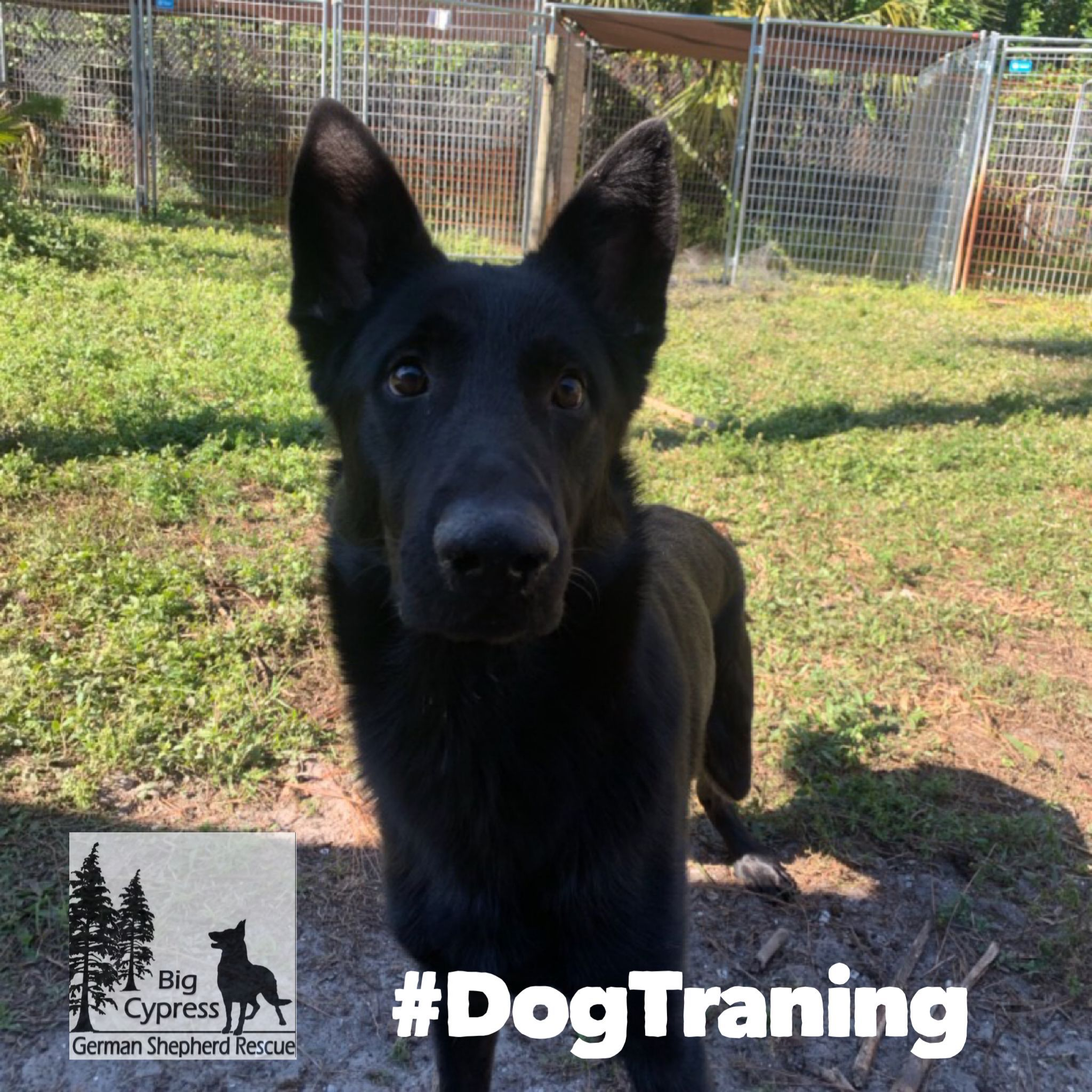 Dog Training Education Month 2019 February We All Know Someone