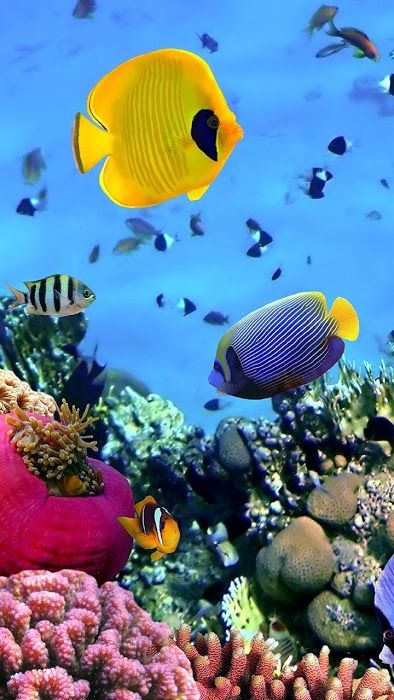 Deep Ocean 3d Live Wallpaper Download Deep Ocean 3d Live Fish Background Aquarium Live Wallpaper Fish Wallpaper