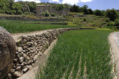 France : Unesco Causses Cévennes