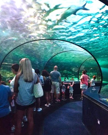Feel like you are under the sea at Ripley's Aquarium in ...