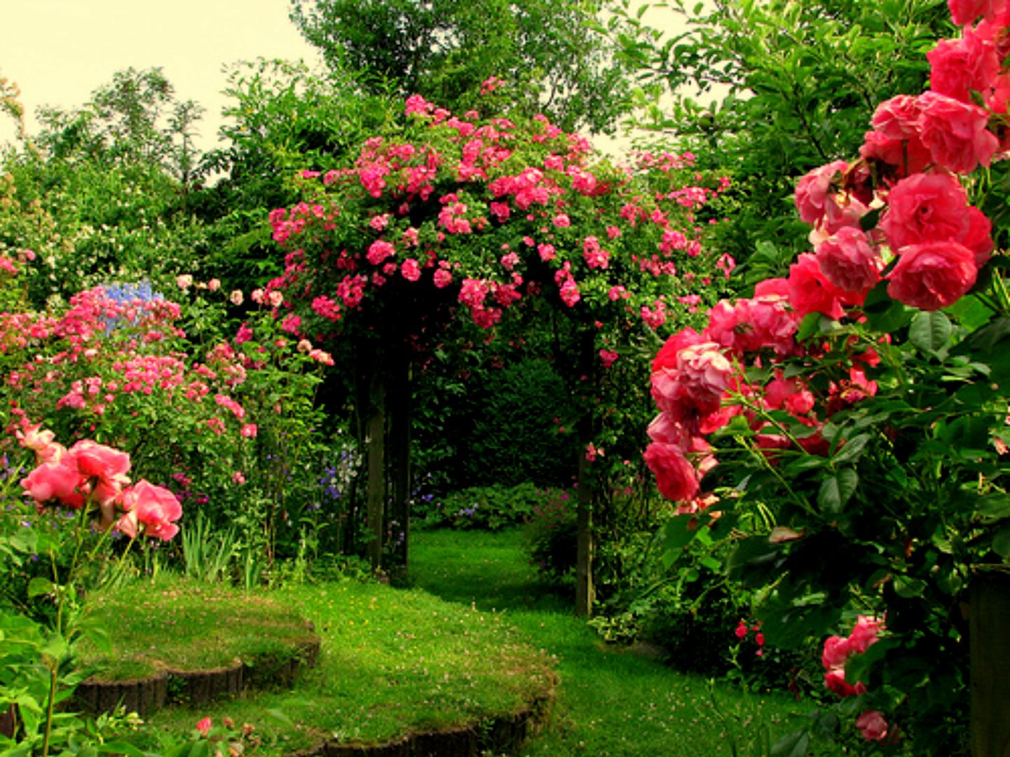 Thousands of splendid roses great beauty and luscious for Rose garden design