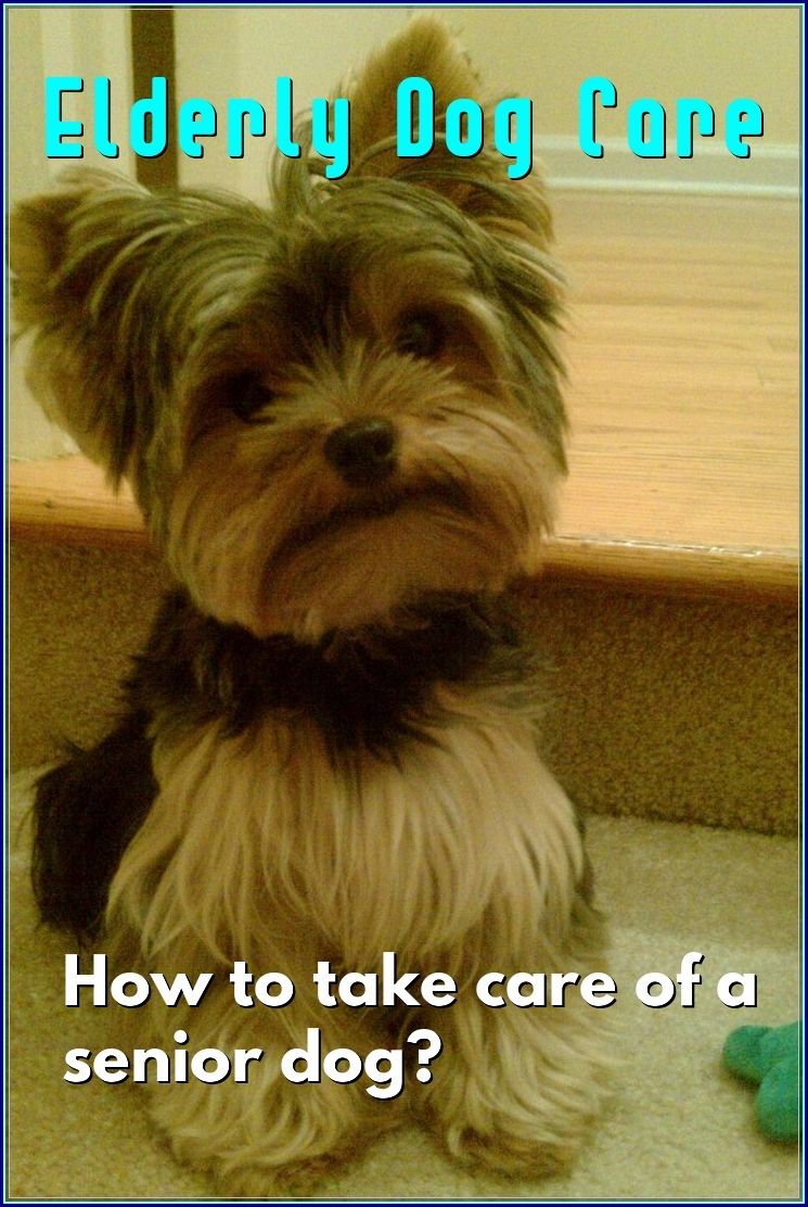 The Best Options For Elderly Dog Care Dog Care Dogs Dog Care Tips