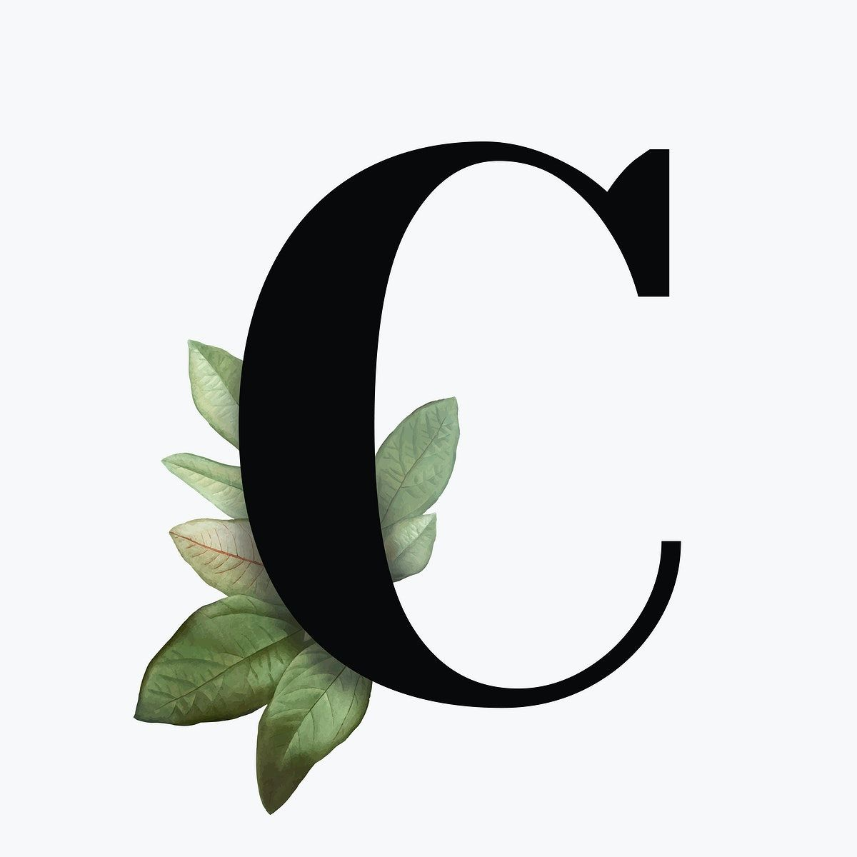 Botanical Capital Letter C Font Design Free Image By Rawpixel Com Aum Lettering Alphabet Fonts Lettering Letter C