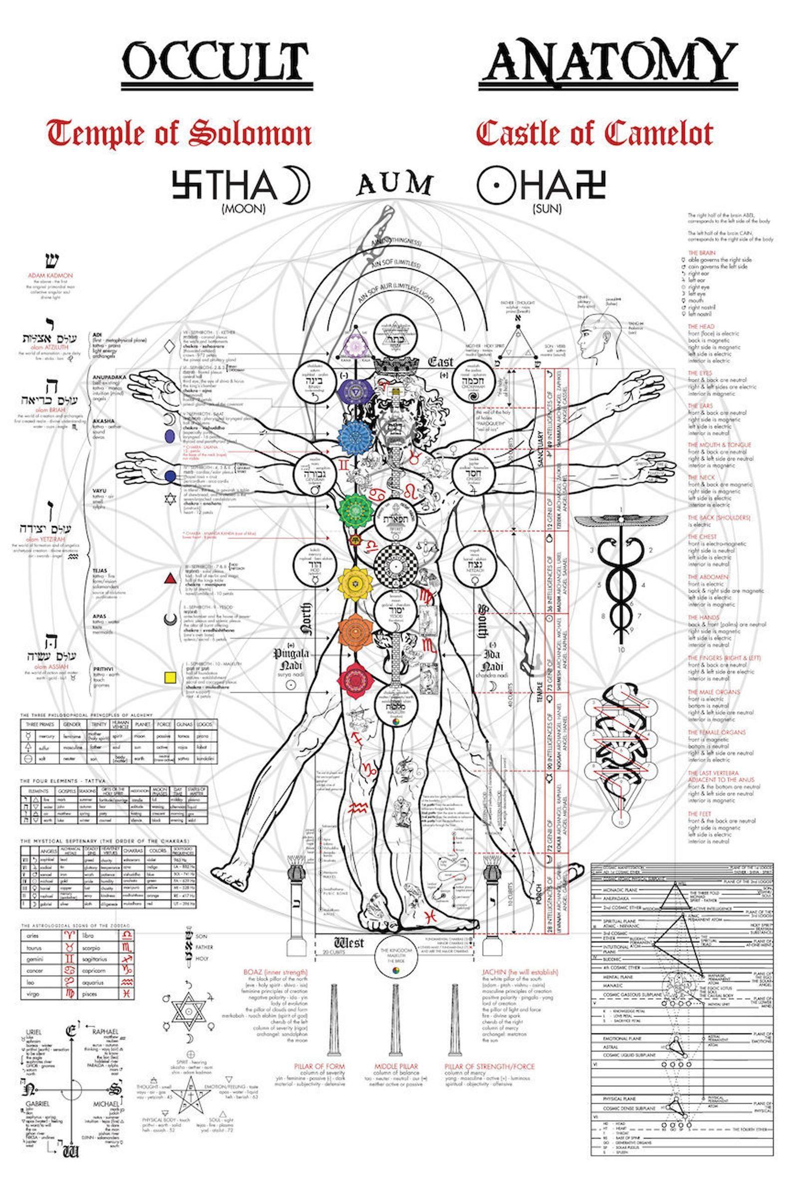 Impresión de anatomía oculta 24x36 ? Kabbalah ? Alquimia