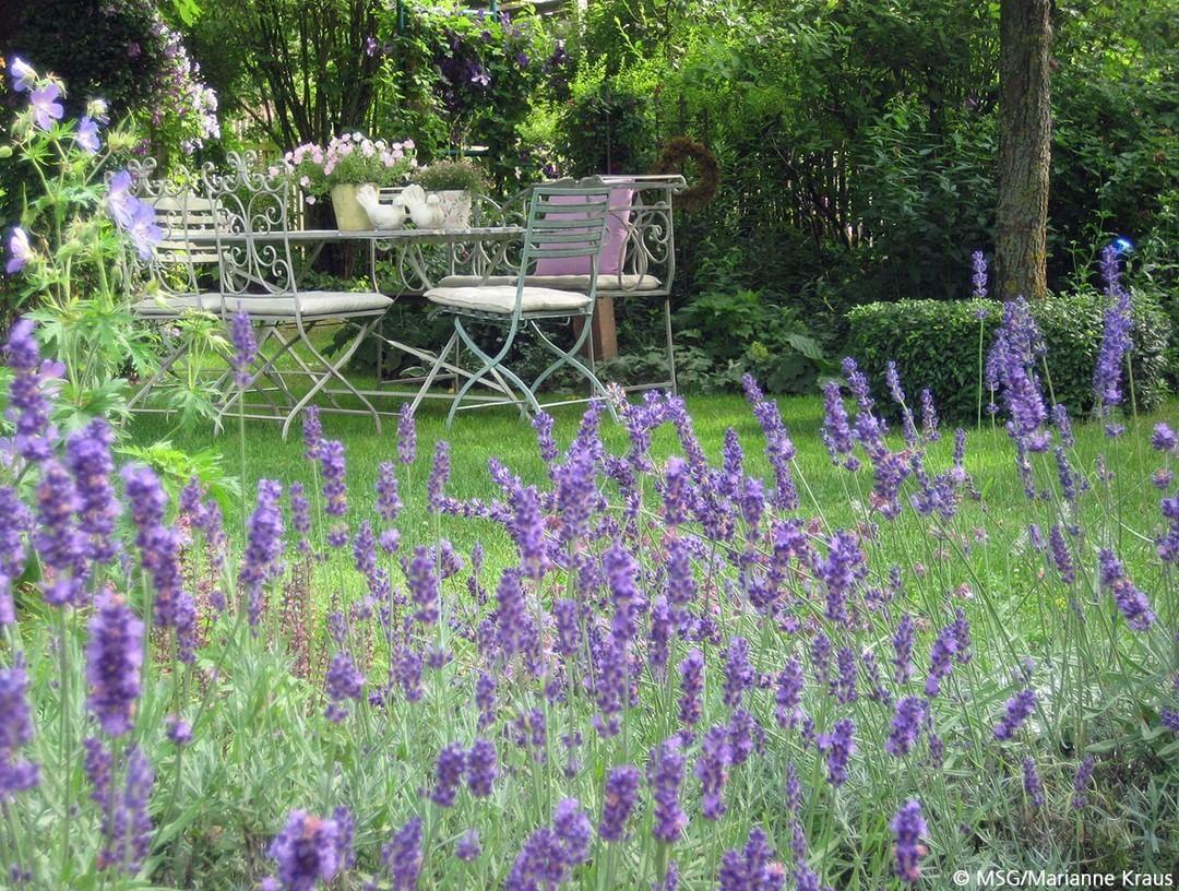 Mein Schoner Garten On Instagram Ob Im Beet Oder Im Kubel Lavendel Bereitet Uns Jahrelang Freude Wenn Er Richt Outdoor Furniture Sets Plants Outdoor Decor