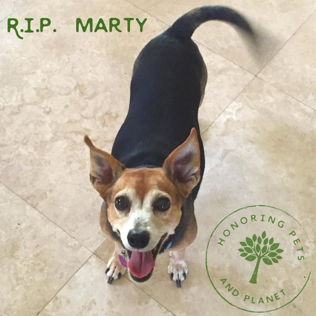R I P Marty Remembered By His Family As Having The Biggest Heart And Clearly The Best Smile Doglover Dogsofinstagra In 2020 Dog Life Dog Lovers Pets