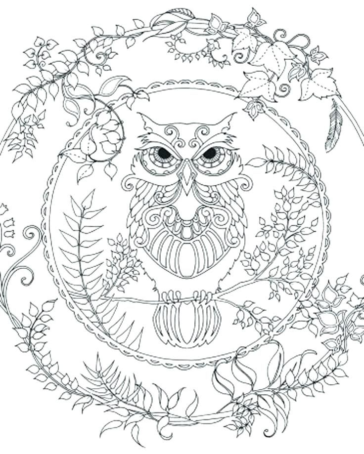 Owl Coloring Pages | Pinterest | Owl, Wise owl and Baby owl