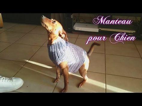 """Tuto Tricot """" Manteau pour Chien"""" - YouTube"""