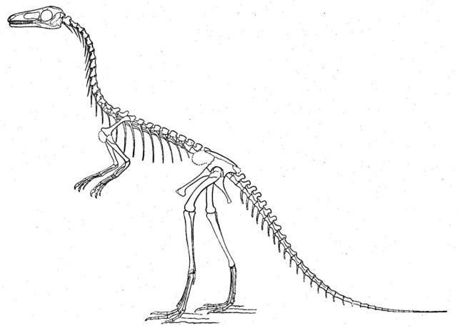 Free Coloring Pictures Of Dinosaurs : Printable source http www kids dinosaurs com dinosaur skeleton