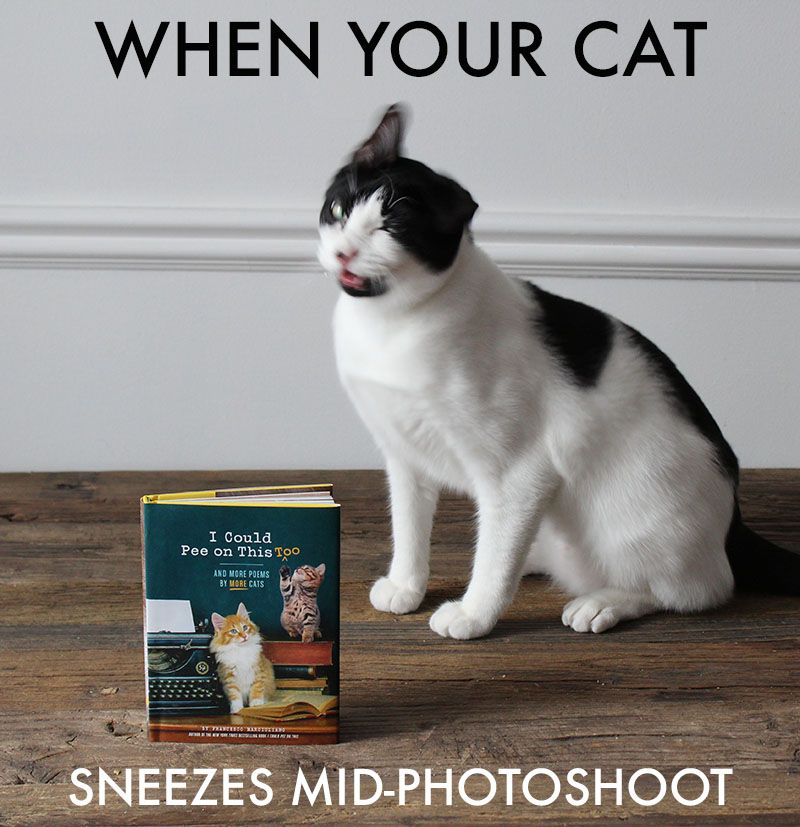 I Could Pee on This, Too: And More Poems by More Cats out August 16th! Pre-Order TODAY!