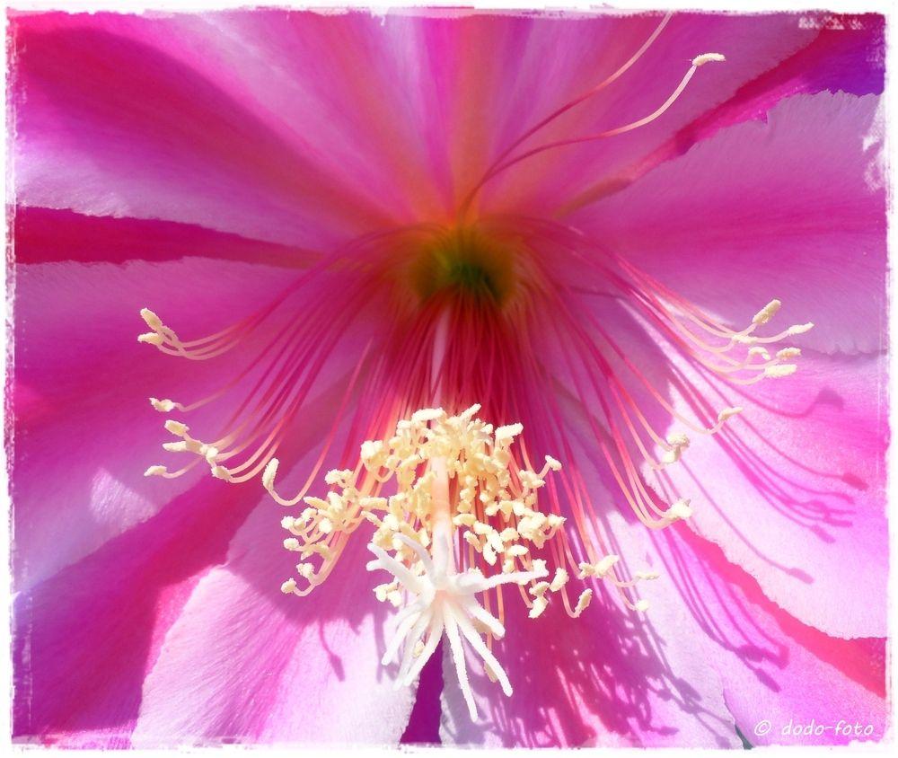 ein Traum in rosa von dodo139