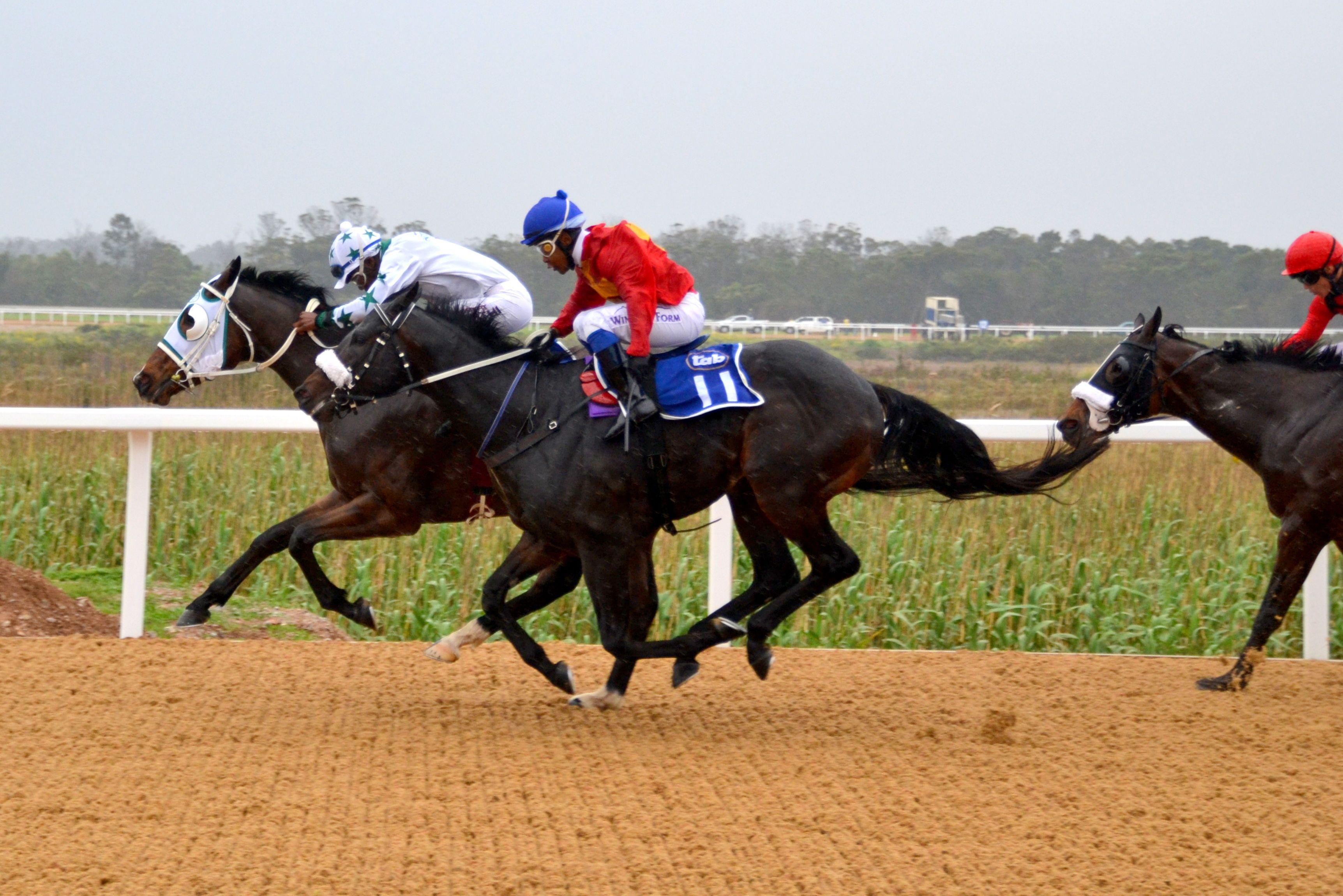 Fairview Horse Racing