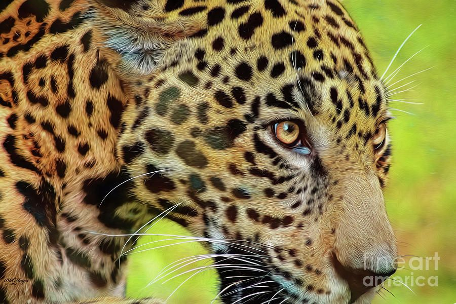 Jaguar Up Very Close By Dbhayes Logo Design Branding Food Southern Artist Beauty In Art