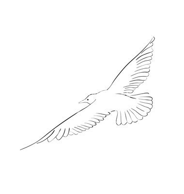 black drawing of seagull isolated on the white vector image on vectorstock