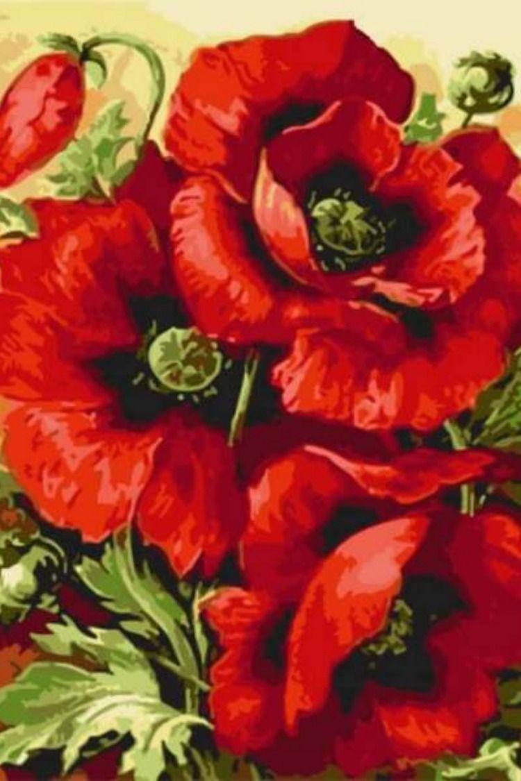 Картины по номерам на холсте Цветы, раскраски по номерам ...