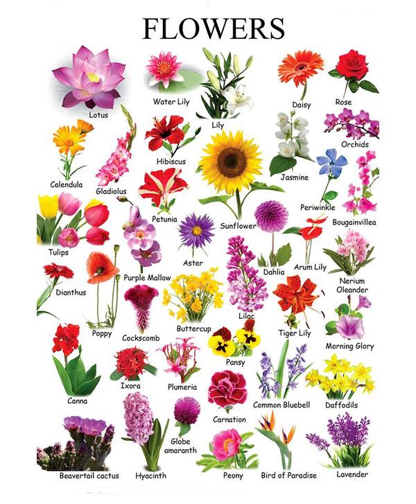 Название цветов в цветочном магазине с картинками