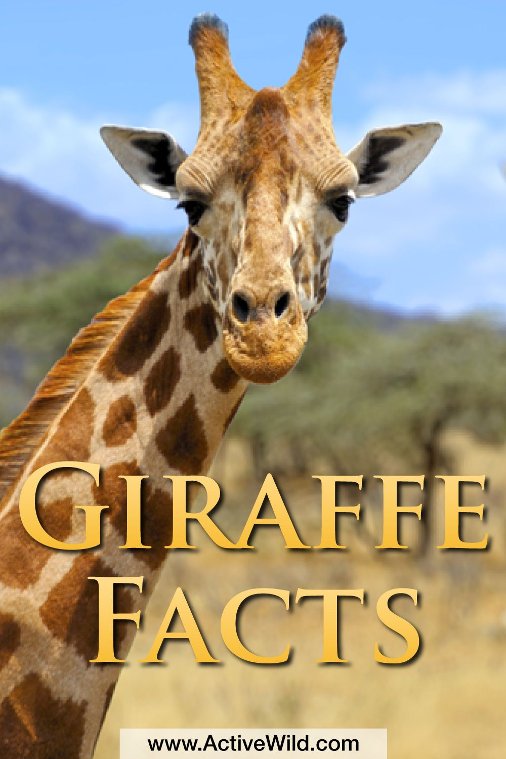 Giraffe Facts For Kids: Information & Pictures from Active ...