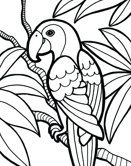 Free Coloring Pages For Middle Schoolers Jungle Coloring Pages, Bird Coloring  Pages, Easy Coloring Pages