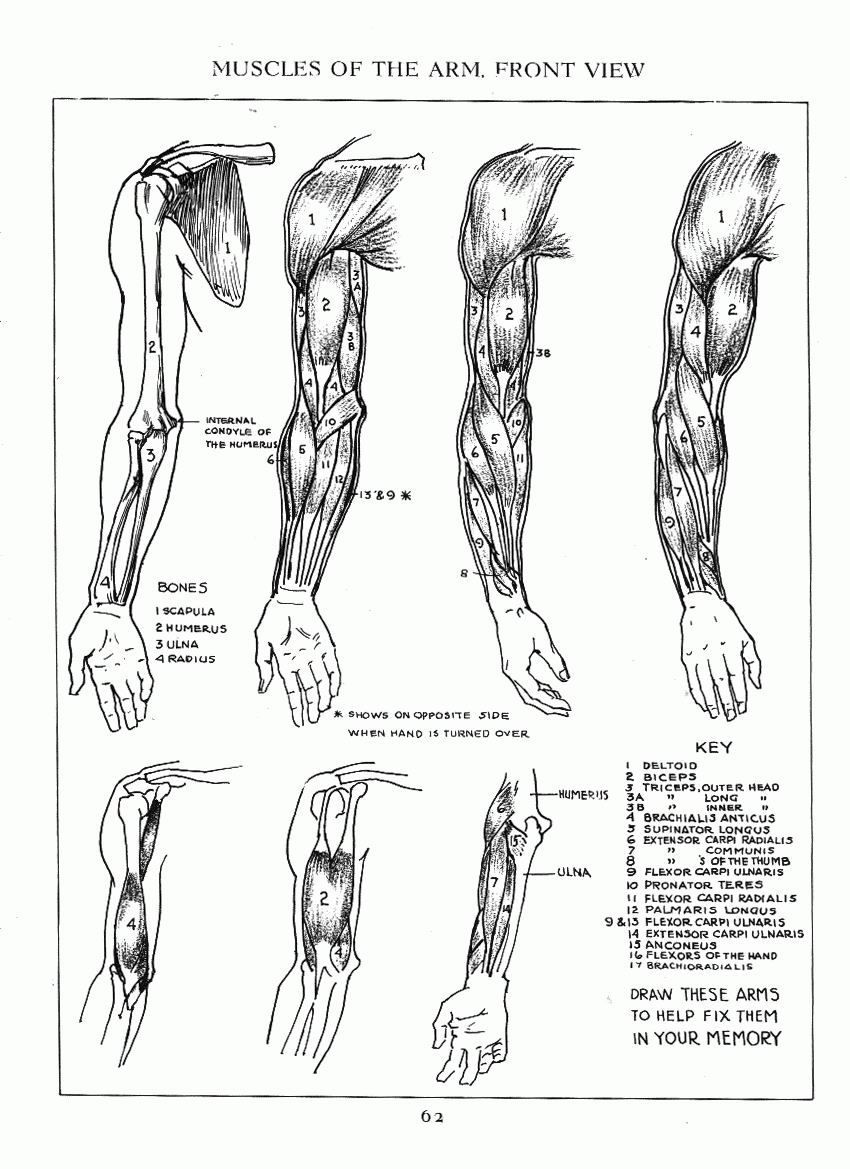 Pin By Pio On Drawing Figures Pinterest Anatomy Reference