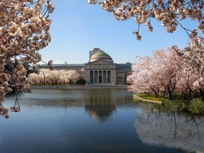 Photos More Cherry Blossom Trees Come To Jackson Park Jackson Park Chicago Cherry Blossom Tree Park