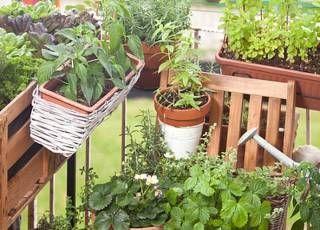 Welches Gemüse für den Balkongarten?
