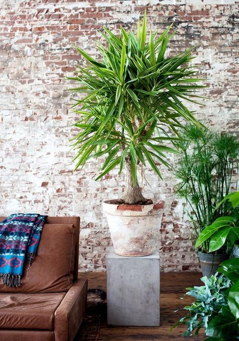 Bien choisir sa plante du0027intérieur - comment choisir sa peinture
