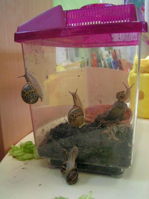 Autour des escargots ps gs elevage escargot escargot maternelle et escargot - Escargot maternelle ...