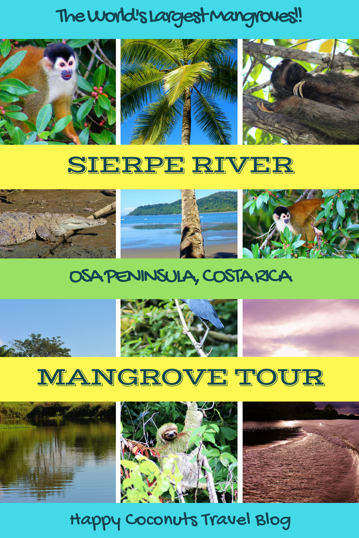 Sierpe River Mangrove Tour in Costa Rica |  Osa Peninsula Costa Rica |  Rio Sierpe Costa Rica |  Mangrove Tours in Costa Rica |  Activities in Costa Rica |  Adventures in Costa Rica |  Vacation in Costa Rica |  Animals of Costa Rica |  Happy Coconuts |  Monkeys, Sloths, Crocodiles, Birds of Costa Rica |