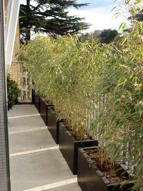 une haie de bambou | jardin | Pinterest | Balkon, Terrasse und Japan ...
