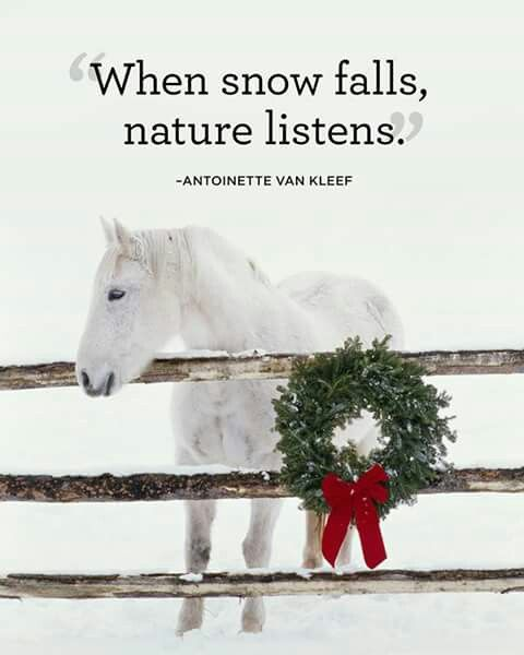 When snow falls nature listens.