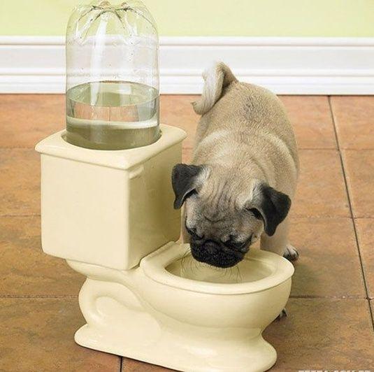 Dog bowl toilet. Classic! lmao
