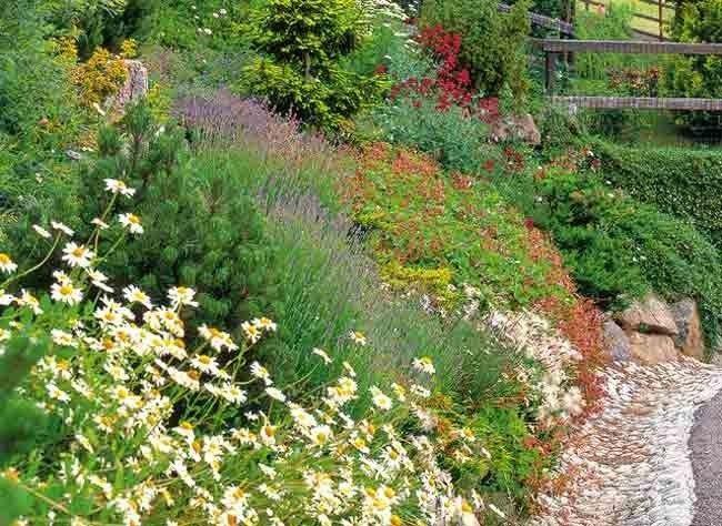 couvre sol vivaces et plantes alpines pour jardin en pente jardin en pente couvre sol et jardins. Black Bedroom Furniture Sets. Home Design Ideas