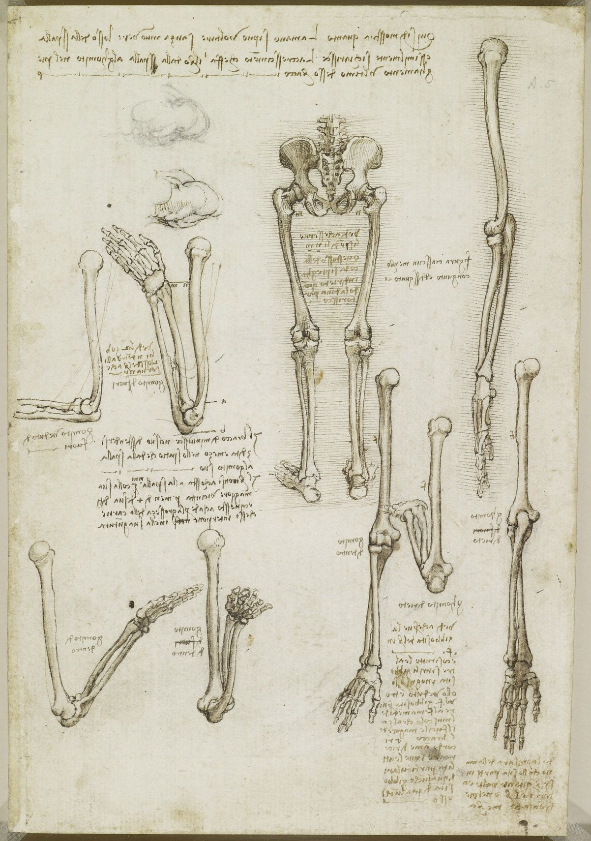 Leonardo da Vinci (Vinci 1452-Amboise 1519) - Recto: The bones of ...
