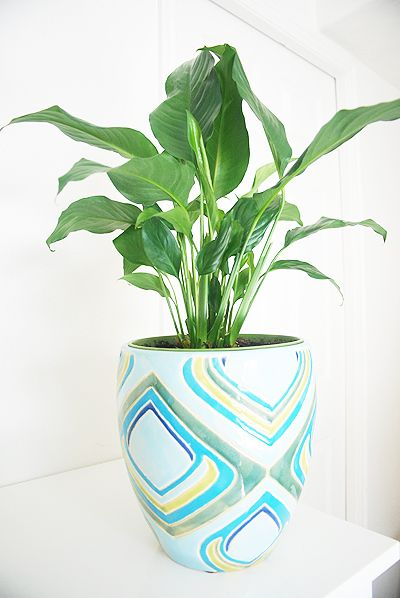 The Breathtaking Benefits of Houseplants · Jillee | One Good Thing on kalanchoe plant benefits, janet craig plant benefits, ficus plant benefits, hibiscus plant benefits, croton plant benefits, aloe plant benefits, cactus plant benefits, marigold plant benefits, lavender plant benefits, bird of paradise plant benefits, snake plant benefits,