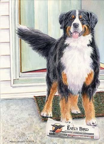 """""""Bernese Paper Boy"""" A Limited Edition Bernese Mountain Dog Print"""