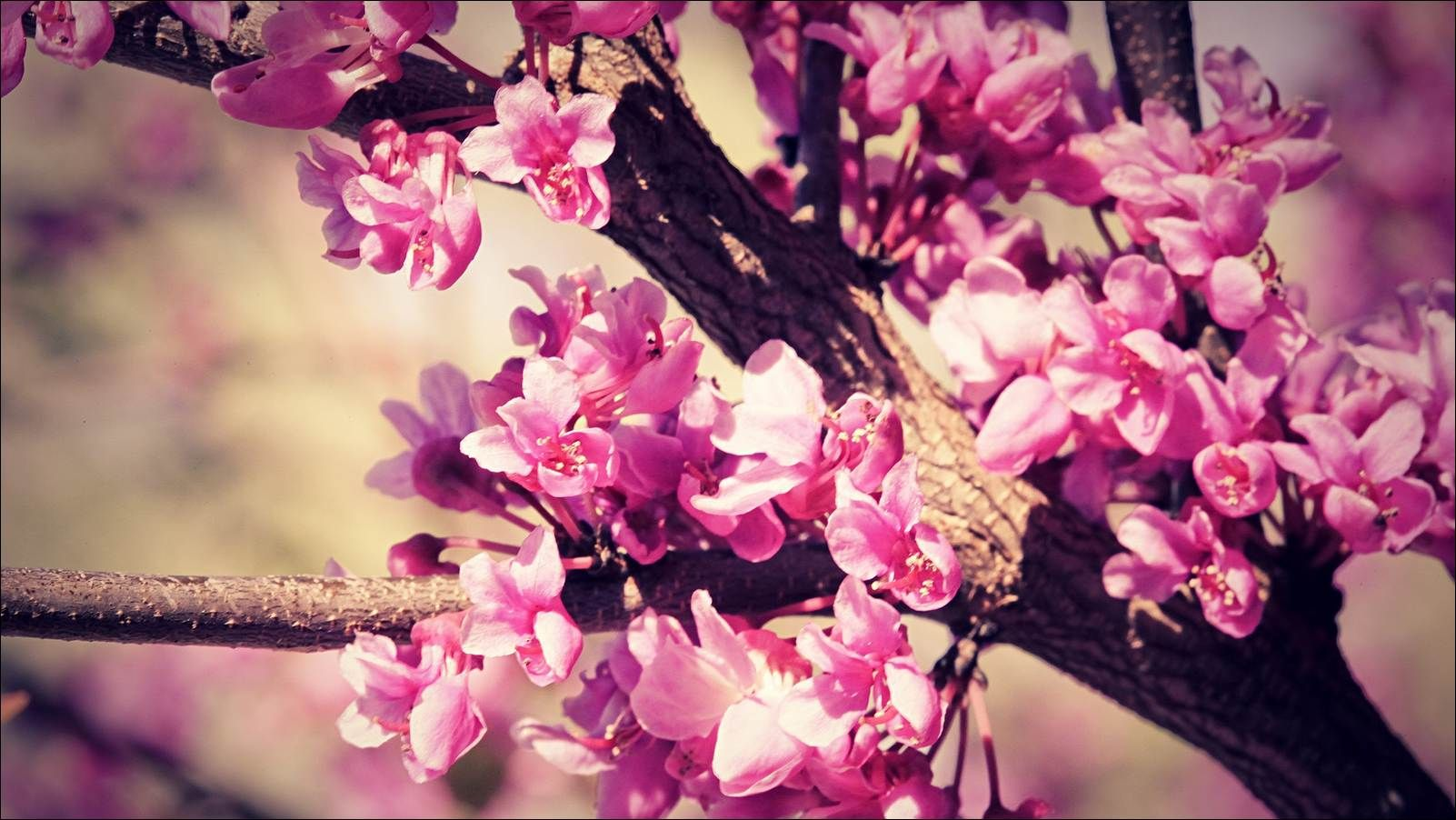 Wallpapers Tumblr Flowers Cosas Interesantes Pinterest Spring