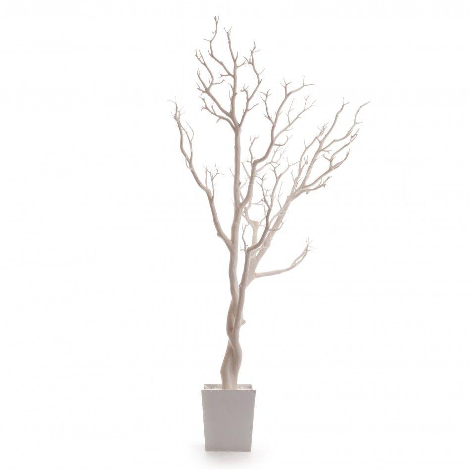 Manzanita Tree In Pot - 4 Ft WHITE Manzanita Tree (Bendable) [403129 ...
